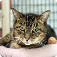 Adopt A Pet :: Buzzy - St. Paul, MN