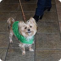 Adopt A Pet :: Daisy - Cedarbrook, NJ