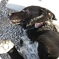 Adopt A Pet :: Bowie - West Richland, WA
