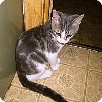 Adopt A Pet :: Avery - Kirkwood, DE