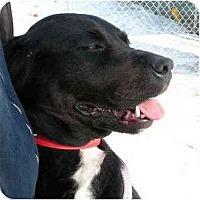 Adopt A Pet :: Kelsey - Rigaud, QC