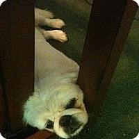 Adopt A Pet :: *Trickey (& Tassie) - Winder, GA