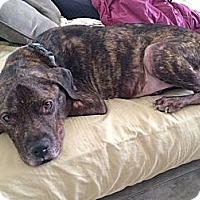 Adopt A Pet :: Cody Jones - Scottsdale, AZ