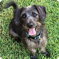 Adopt A Pet :: Sparky - Kingwood, TX