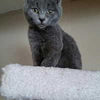 Adopt A Pet :: Mason - Jefferson, OH