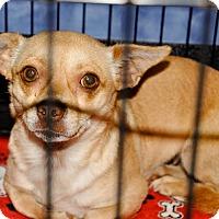 Adopt A Pet :: Bea - Gainesville, FL