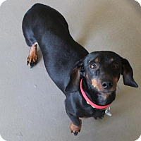 Adopt A Pet :: Weeble - Atlanta, GA