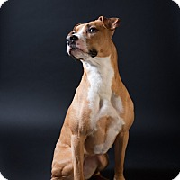 Adopt A Pet :: Nootka - Bellingham, WA
