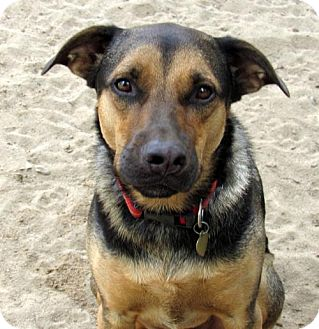 German Shepherd Dog Mix Dog for adoption in Holly Springs, North Carolina - Tasi