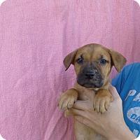 Adopt A Pet :: Jenna - Oviedo, FL