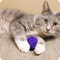 Adopt A Pet :: Evvie - Chicago, IL