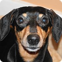 Adopt A Pet :: Dalia - Cincinnati, OH
