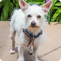 Adopt A Pet :: Murphy D4150 (was Milo) - Fremont, CA