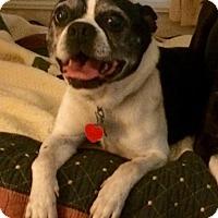 Adopt A Pet :: Gordy - Nashville, TN