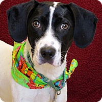 Adopt A Pet :: Hammy - Waukesha, WI