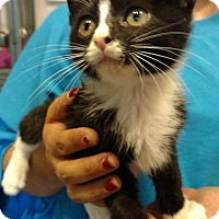 Adopt A Pet :: Hendrix - Hanna City, IL