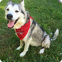 Adopt A Pet :: Nakoma - Clearwater, FL