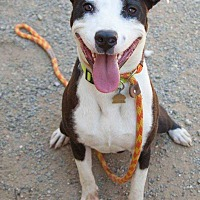 Adopt A Pet :: Niko - Livermore, CA