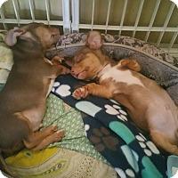 Adopt A Pet :: Pancho - San Antonio, TX