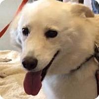 Adopt A Pet :: Yahtzee - St. Cloud, MN