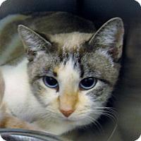 Adopt A Pet :: Smokey - Stillwater, OK