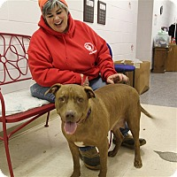 Adopt A Pet :: Lucy - Elyria, OH