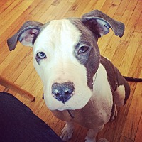 Adopt A Pet :: una - Philadelphia, PA