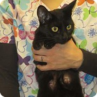 Adopt A Pet :: Onyx - Wildomar, CA