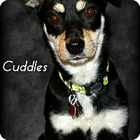 Adopt A Pet :: Cuddles - Gig Harbor, WA