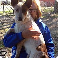 Adopt A Pet :: Charlie - Quinlan, TX