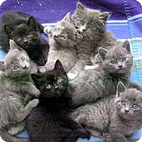 Adopt A Pet :: Fosters Needed! - Los Angeles, CA