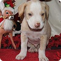 Adopt A Pet :: Maxwell - Costa Mesa, CA