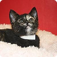 Adopt A Pet :: ANNA - SILVER SPRING, MD