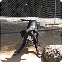 Adopt A Pet :: Trixie - phoenix, AZ
