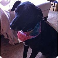 Adopt A Pet :: HARLEY - Minnetonka, MN