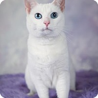 Adopt A Pet :: Luna - Eagan, MN