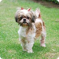 Adopt A Pet :: GABRIELLA - Los Angeles, CA