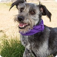 Adopt A Pet :: Brando - Patterson, CA