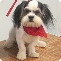 Adopt A Pet :: Finnigan - Allentown, PA