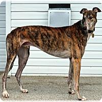 Adopt A Pet :: Cy - Harrisburg, PA