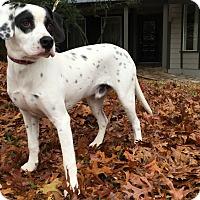 Adopt A Pet :: Alfalfa - Austin, TX