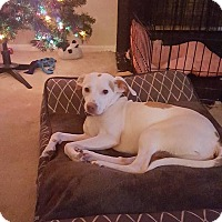 Adopt A Pet :: jesse - North Brunswick, NJ
