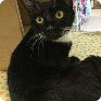 Adopt A Pet :: Elsa - Manchester, CT
