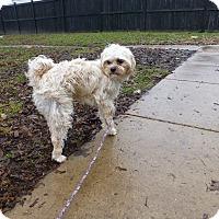Adopt A Pet :: Bowie - Wyanet, IL