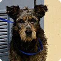 Adopt A Pet :: Wrigley - West Hartford, CT