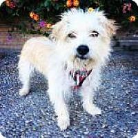 Adopt A Pet :: Cora - Santa Cruz, CA