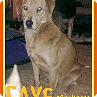 Golden Retriever/Chow Chow Mix Dog for adoption in Sebec, Maine - FAYE