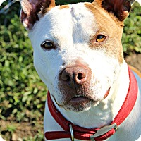 Pit Bull Terrier Mix Dog for adoption in Dunkirk, New York - Yara