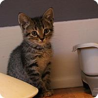 Adopt A Pet :: Iris - Rochester Hills, MI