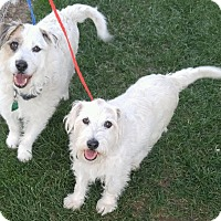Adopt A Pet :: Kicker and Trixie - Fruit Heights, UT